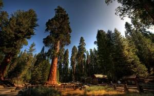 949294-redwood