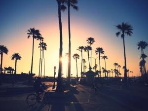 LA palm trees.